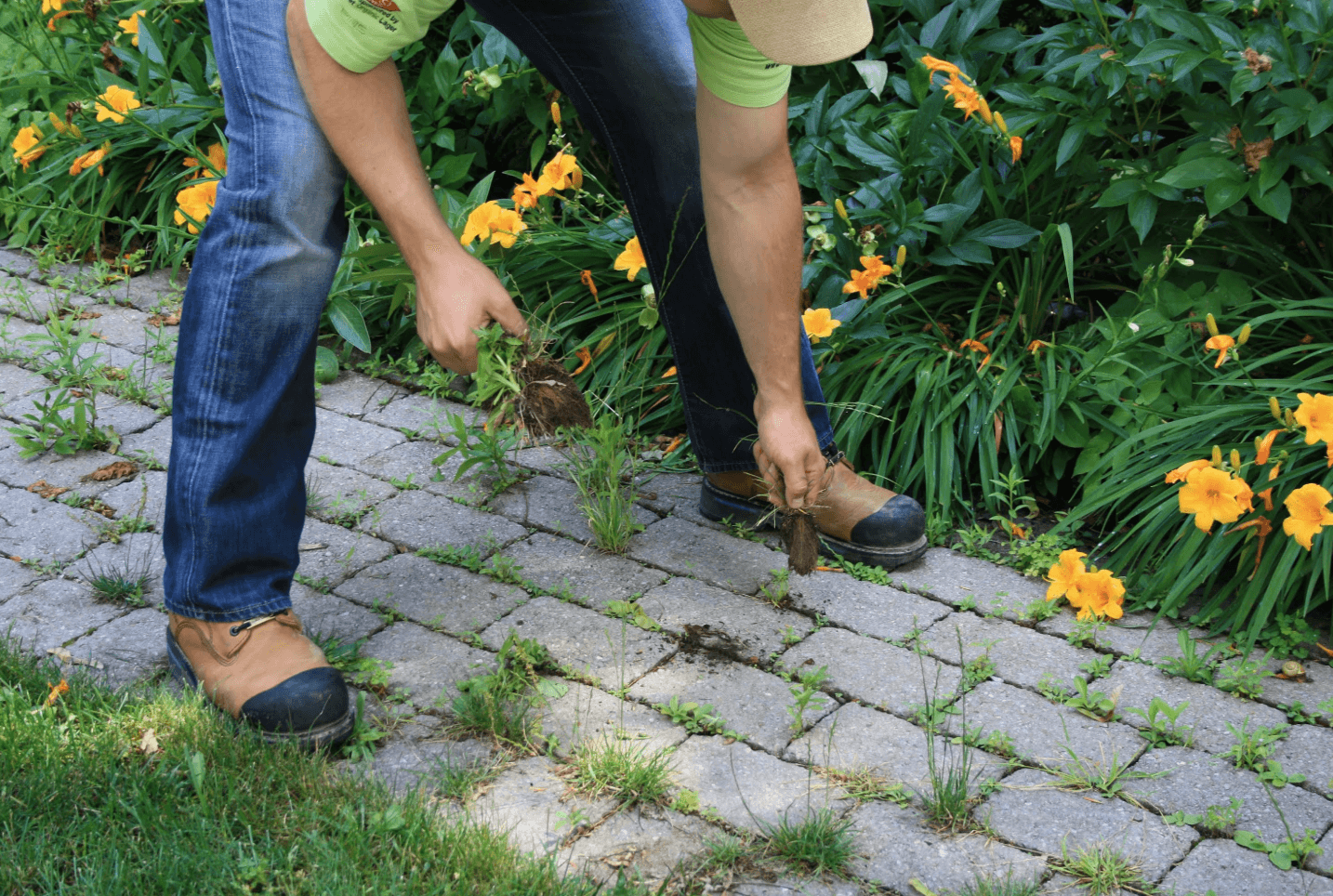 Summer Is The Best Time To Kill Your Weeds!